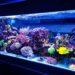 How To Start An Aquarium Maintenance Business