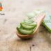 Aloe Vera Gel Manufacturing Business Cost, Profit, How To Start, Requirements | SkillsAndTech