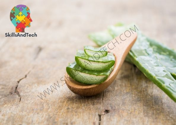 Aloe Vera Gel Manufacturing Business Cost, Profit, How To Start, Requirements   SkillsAndTech