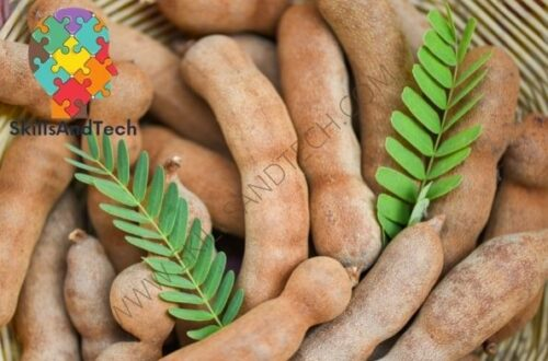 Tamarind Paste Making Business Cost, Investment, Profit, Requirements   SkillsAndTech