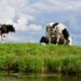 Dairy Farming Business In India Cost, Profit, Business Plan, Requirements | SkillsAndTech