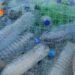 Plastic Business Cost, Profit, Requirements | SkillsAndTech