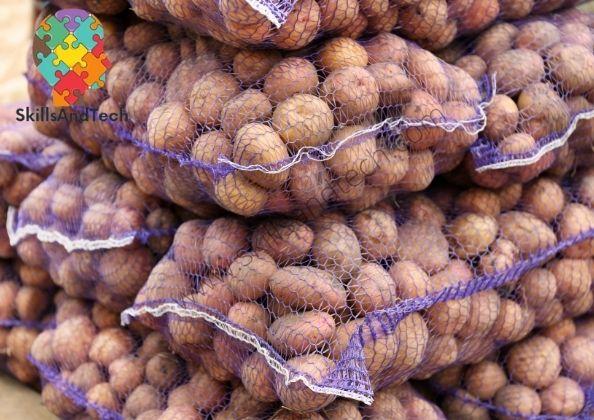Potato Onion Wholesale Business How to Start, Cost, Profit | SkillsAndTech